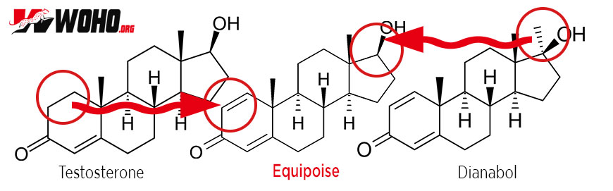 Equipoise (Boldenone) - Don't Buy Until You Read This 2019