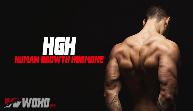HGH (Human Growth Hormone)